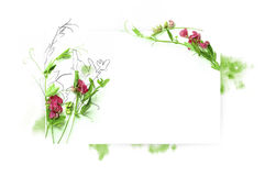 Modello per progettazione dell'invito con il contorno della spruzzata dell'acquerello e del fiore fresco e dell'inchiostro Immagini Stock Libere da Diritti