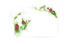 Modello per progettazione dell'invito con il contorno della spruzzata dell'acquerello e del fiore fresco e dell'inchiostro Fotografia Stock Libera da Diritti