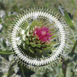 Modello rotondo dell'ornamento su un fiore Fotografia Stock