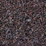 Modello sciolto nero dettagliato di struttura della foglia di tè, grande macro primo piano dettagliato, fondo strutturato Immagini Stock