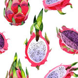 Modello selvaggio del frukt di pitaya esotico in uno stile dell'acquerello Fotografie Stock