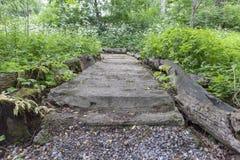 Modello semplice del fondo della foto del percorso concreto in foresta Fotografia Stock
