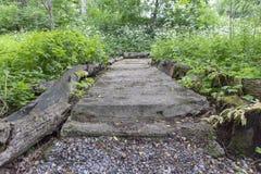 Modello semplice del fondo della foto del percorso concreto in foresta Immagini Stock Libere da Diritti