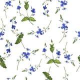 Modello senza cuciture blu del fiore o del nontiscordardime di estate Illustrazione dell'acquerello illustrazione vettoriale