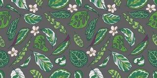 Modello senza cuciture con foglie ed i fiori della pianta esotica di Calathea, del Pothos e di Monstera su fondo grigio royalty illustrazione gratis