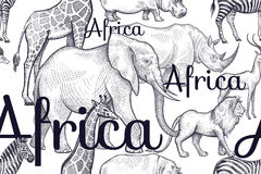 Modello senza cuciture con gli elefanti, giraffe, rinoceronti, ippopotami, leoni Fotografia Stock