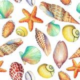 Modello senza cuciture con gli oggetti subacquei di vita, su fondo bianco Progettazione-SHELL marino, stella di mare Acquerello d Fotografia Stock Libera da Diritti