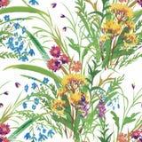 Modello senza cuciture con i bei fiori, pittura dell'acquerello Immagine Stock Libera da Diritti