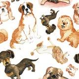 Modello senza cuciture con i cani: Cane di St Bernard, bassotto tedesco, cibo di cibo, barboncino, carlino Fotografia Stock Libera da Diritti