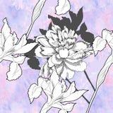 Modello senza cuciture con i fiori in bianco e nero Fotografia Stock Libera da Diritti