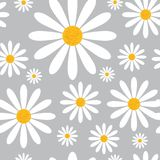 Modello senza cuciture con i fiori della camomilla su Grey Background Beautiful Floral Ornament Immagini Stock