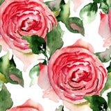 Modello senza cuciture con i fiori della rosa rossa Fotografia Stock Libera da Diritti