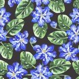 Modello senza cuciture con i fiori e le foglie dell'acquerello illustrazione di stock