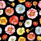 Modello senza cuciture con i fiori multicolori del papavero Fotografia Stock