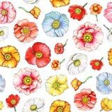 Modello senza cuciture con i fiori multicolori del papavero Fotografia Stock Libera da Diritti