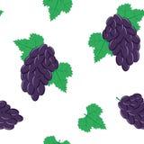 Modello senza cuciture con i mazzi di uva nera sopra Immagini Stock