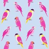 Modello senza cuciture con i pappagalli variopinti Immagini Stock Libere da Diritti