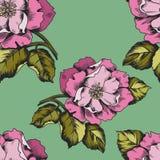 Modello senza cuciture con i peoni dei fiori per la stampa sulla carta o sul tessuto Fotografia Stock Libera da Diritti