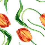 Modello senza cuciture con i tulipani Immagine Stock Libera da Diritti