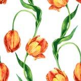 Modello senza cuciture con i tulipani Fotografia Stock Libera da Diritti