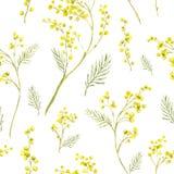 Modello senza cuciture con il ramoscello dell'acquerello della mimosa Fotografie Stock Libere da Diritti