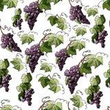 Modello senza cuciture con il ramoscello dell'uva viola e delle foglie isolate su fondo bianco illustrazione di stock
