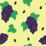 Modello senza cuciture con l'uva nera su verde chiaro Fotografia Stock