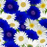 Modello senza cuciture con la camomilla dei fiori Fotografie Stock