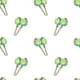Modello senza cuciture con la capsula del seme di papaveri in acquerello Fotografia Stock