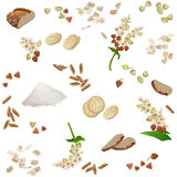 Modello senza cuciture con le derrate alimentari del grano saraceno Immagine Stock Libera da Diritti