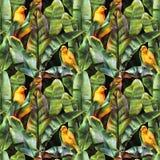 Modello senza cuciture con le foglie della banana e gli uccelli gialli su un fondo scuro illustrazione di stock