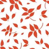 Modello senza cuciture con le foglie di autunno rosse su bianco Illustrazione di vettore Fotografia Stock Libera da Diritti