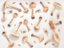 Modello senza cuciture d'avanguardia di disposizione piana con il parasole del fungo della foresta, Fotografia Stock