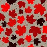 Modello senza cuciture dalle foglie di acero Foglie di acero rosse su un fondo grigio Un fondo di giorno del Canada Fotografie Stock Libere da Diritti