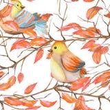 Modello senza cuciture degli uccelli dell'acquerello sui rami con le foglie rosse, disegnato a mano su un fondo bianco Immagine Stock