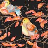 Modello senza cuciture degli uccelli dell'acquerello sui rami con le foglie rosse, disegnato a mano su un fondo scuro Fotografia Stock Libera da Diritti