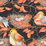 Modello senza cuciture degli uccelli e dei nidi dell'acquerello sui rami con le foglie rosse, disegnato a mano su un fondo scuro Fotografia Stock Libera da Diritti