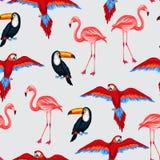 Modello senza cuciture degli uccelli tropicali con i pappagalli Immagini Stock Libere da Diritti
