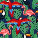 Modello senza cuciture degli uccelli tropicali con le foglie di palma Fotografia Stock Libera da Diritti