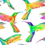 Modello senza cuciture dei colibrì dell'acquerello Vettore Immagini Stock Libere da Diritti