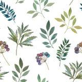 Modello senza cuciture dei ramoscelli e delle foglie Dipinto in acquerello royalty illustrazione gratis
