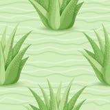 Modello senza cuciture dei succulenti Fotografie Stock Libere da Diritti