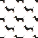 Modello senza cuciture del bassotto tedesco della raccolta del cane Immagini Stock Libere da Diritti
