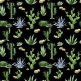 Modello senza cuciture del cactus dell'acquerello Fotografia Stock Libera da Diritti