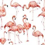 Modello senza cuciture del fenicottero dell'acquerello Uccelli esotici luminosi dipinti a mano isolati su fondo bianco Vita selva illustrazione di stock