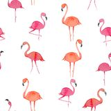 Modello senza cuciture del fenicottero su fondo bianco Uccello esotico progettazione dell'illustrazione per tessuto e la decorazi Fotografia Stock