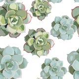 Modello senza cuciture del fiore della molla di vettore con i succulenti Progettazione tenera elegante per il negozio di fiorista royalty illustrazione gratis