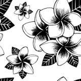 Modello senza cuciture del fiore disegnato a mano del frangipane illustrazione di stock