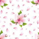 Modello senza cuciture del fondo con il fiore ed i petali di sakura Fotografia Stock Libera da Diritti