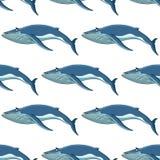 Modello senza cuciture del fondo delle balene blu illustrazione vettoriale